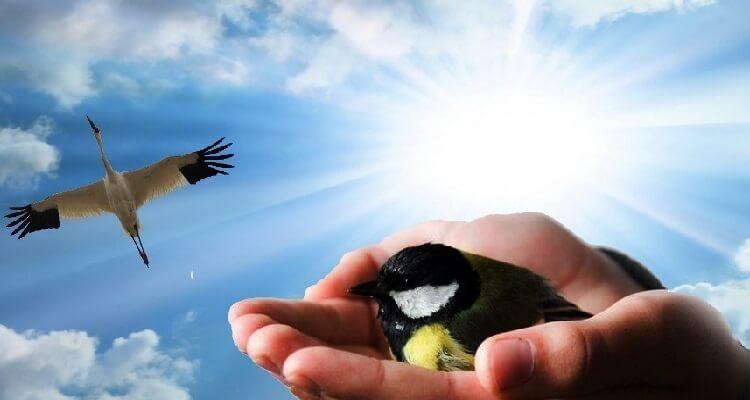 Между журавлём в небе и синицей в руке.